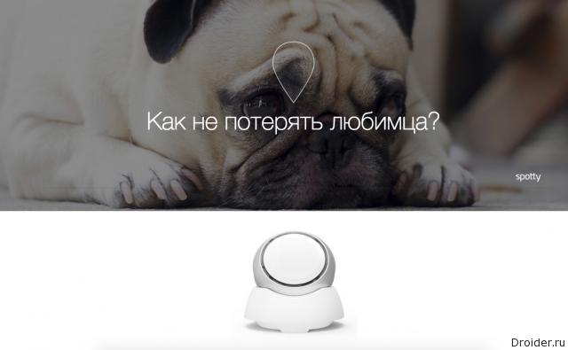 Фитнес-трекер для собак Spotty от российского стартапа