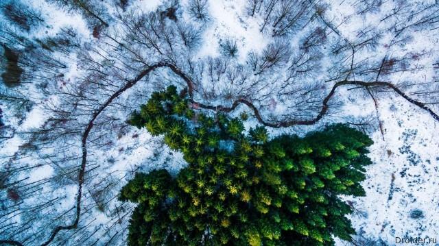"""Сосновый лес в Дании. Первое место в категории """"Живая природа"""". Фотограф: Michael Bernholdt"""