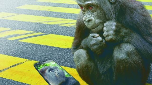 Тизерное фото Gorilla Glass 4