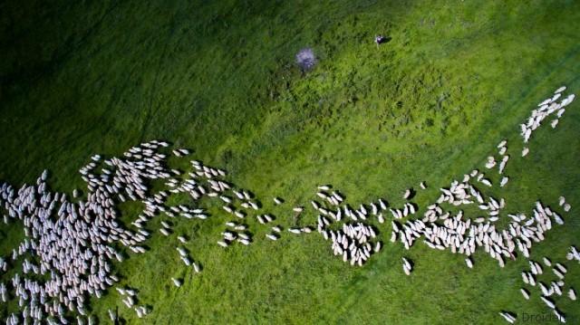"""Отара овец. Марпод, Румыния. Второе место в категории """"Живая природа"""". Фотограф: Szabolcs Ignacz"""